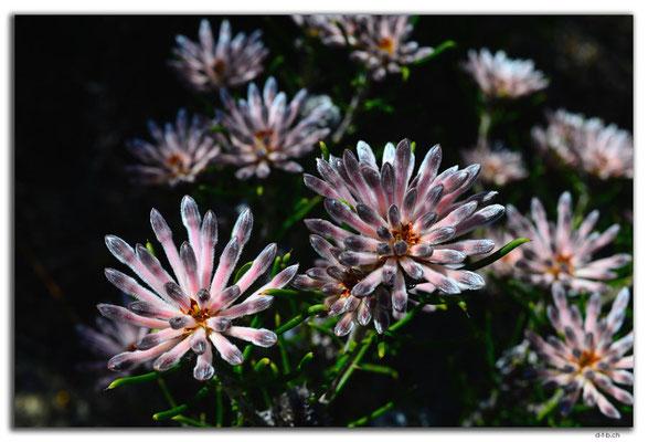 AU0613.Nilgen N.R.Blume