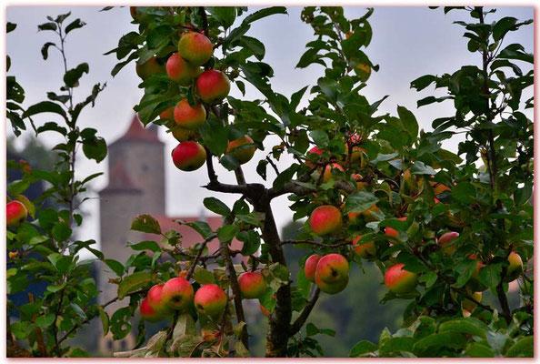 DE167.Rothenburg ob der Tauber, Äpfel