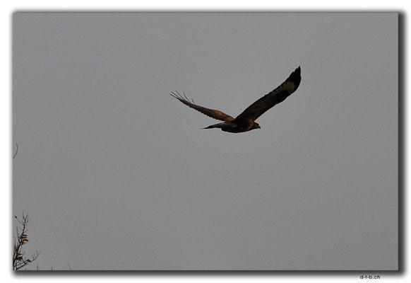 KZ0082.Adler