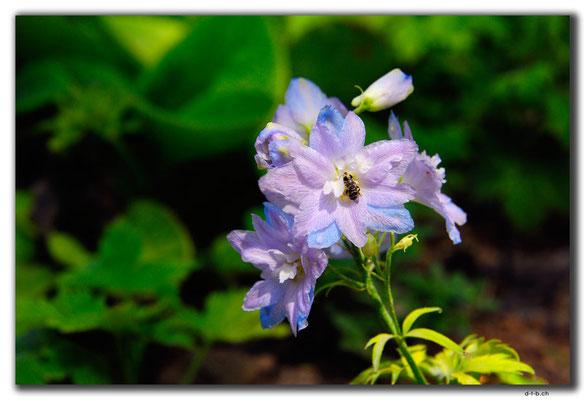 IR0164.Isfahan.Flower Garden