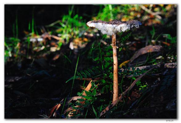 AU1487.Cann River Rainforest Walk.Pilz