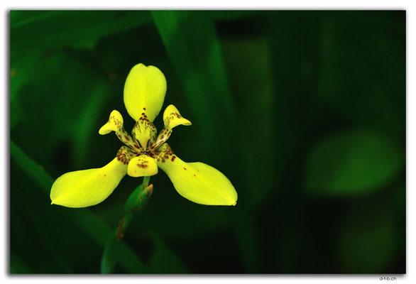 ID0138.Ubud.ARMA.Orchid