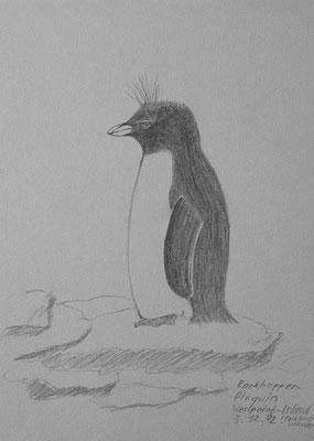 012.Skizze, Rockhopper-Pinguin, Westpoint Island /Falkland Islands - Las Malvinas
