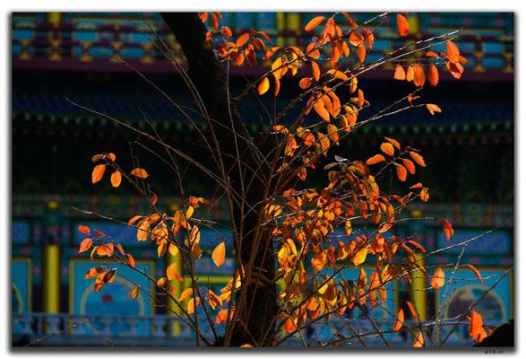 KR0345a.Busan.Samgwangsa Temple