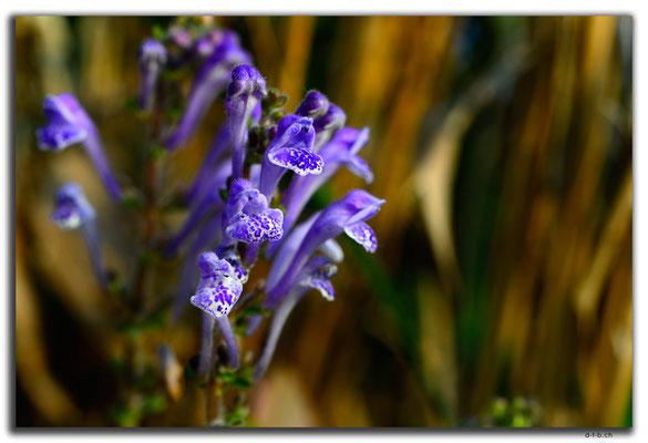 HK0131.Tai To Yan.Orchidee