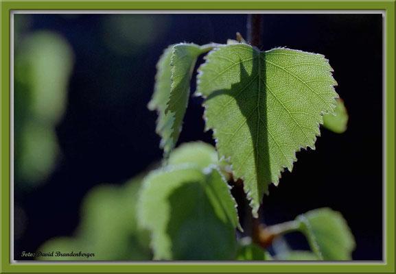 A0189,Blätter.Nynashamn.SE