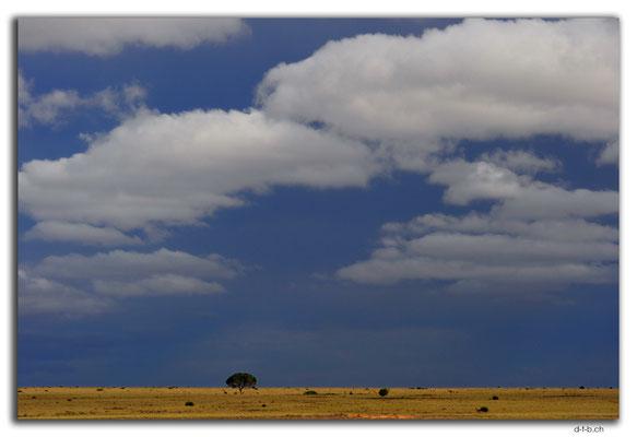AU0908.Eyre Highway.Baum