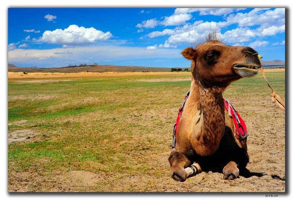 MN0042.Elsen Tasarkhai.Kamel