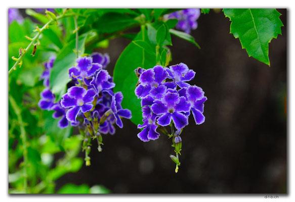 VN0269.Nha Trang.Thap Ba Pongar.Blume