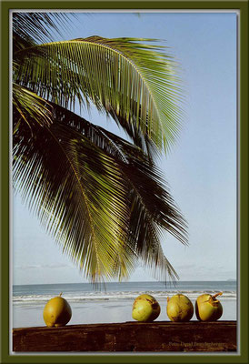 24.Kokospalme,Las Lajas,Panama