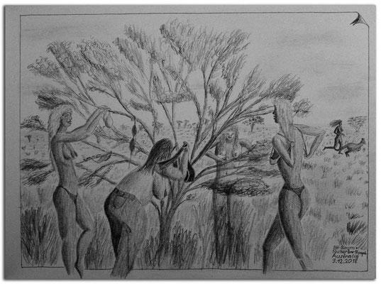 200.Skizze.BH-Baum + Nullarbor Nymph.Australia