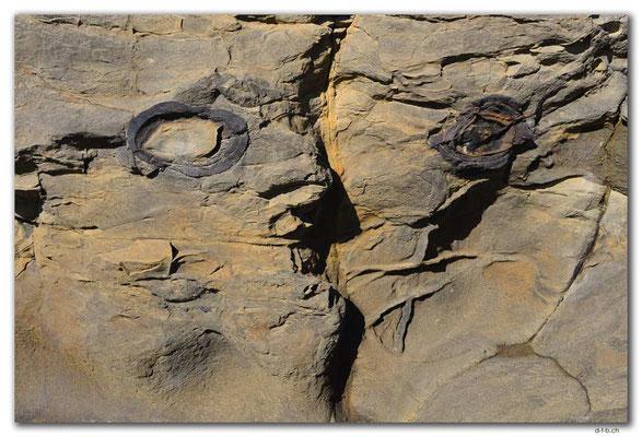 NZ0922.Curio Bay,Jurassic Picasso