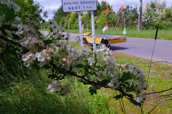 NZ: Solatrike bei Bunnythorpe