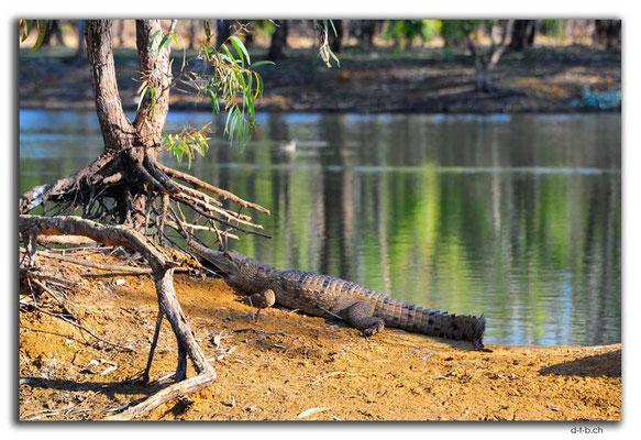 AU0233.Ellendale Lake.Croc