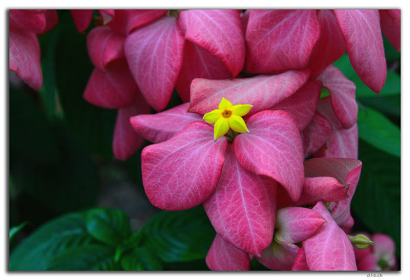 VN0408.HCMC.Blume