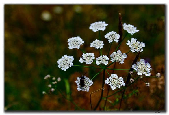 AM022.Sevanavank.Blume