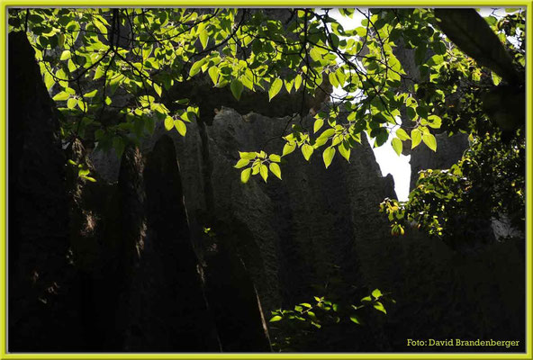 C0866Stone Forest
