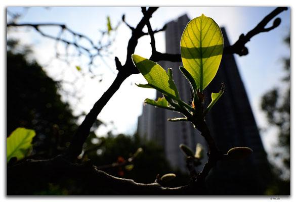 HK0147.Sik Sik Yuen Wog Tai sin Temple
