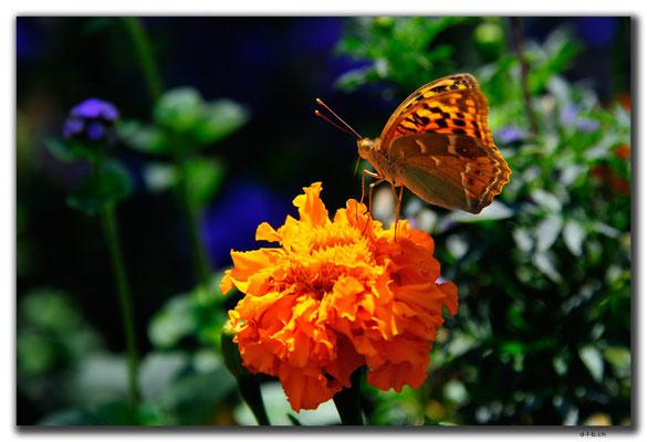 IR0040.Tehran.Schmetterling