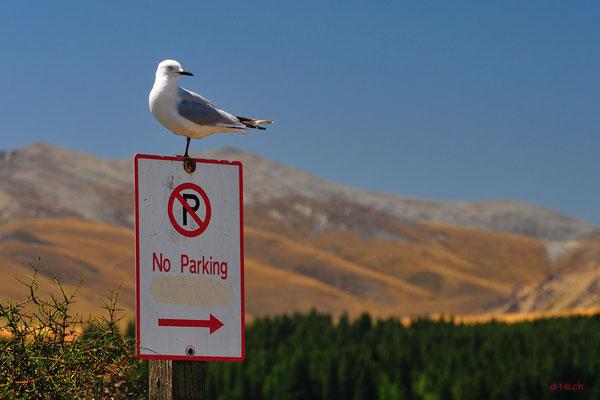 New Zealand. Lake Tekapo