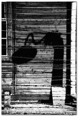PL009.Auschwitz.Schatten