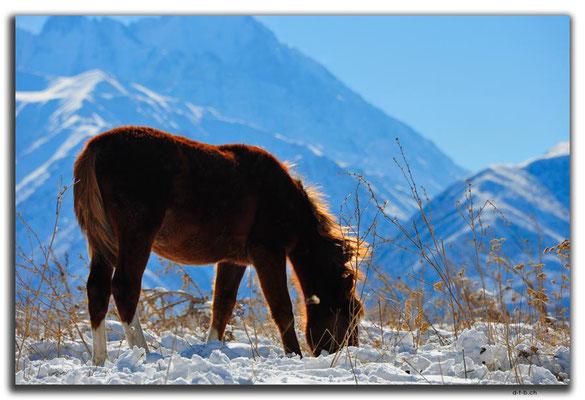 KG0036.Bishkek.Kyrgyz Ala Too und Pferde
