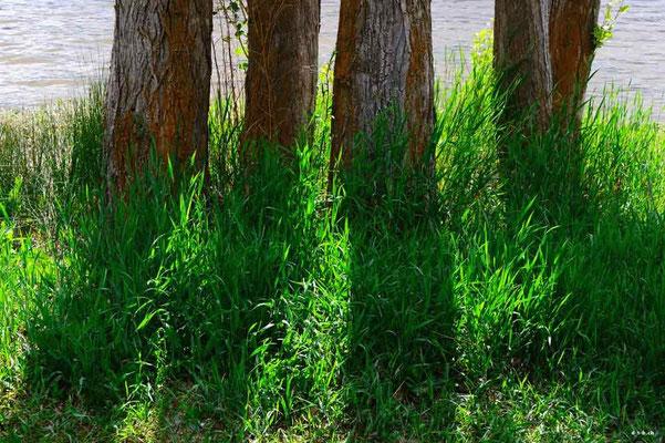 CA0236 Osoyoos Bäume