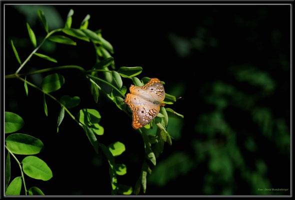 JM066.RPR Schmetterling