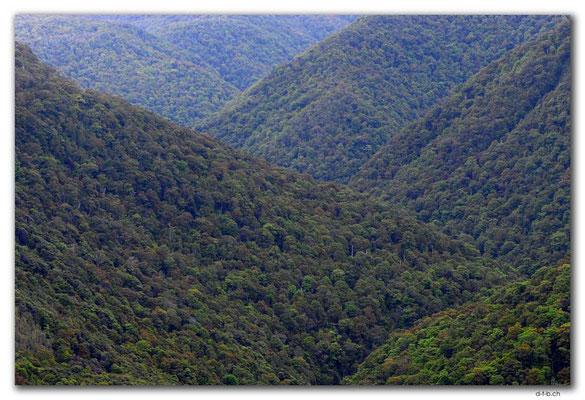 NZ0534.Kahurangi N.P.Takaka River Valley