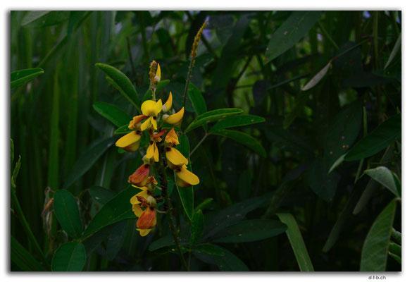 ID0072.Ubud.Blume