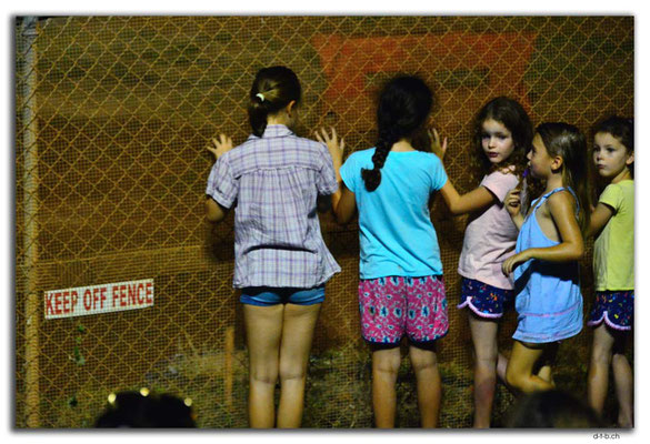AU0003.Darwin.Mud Car race.Keep off fence!