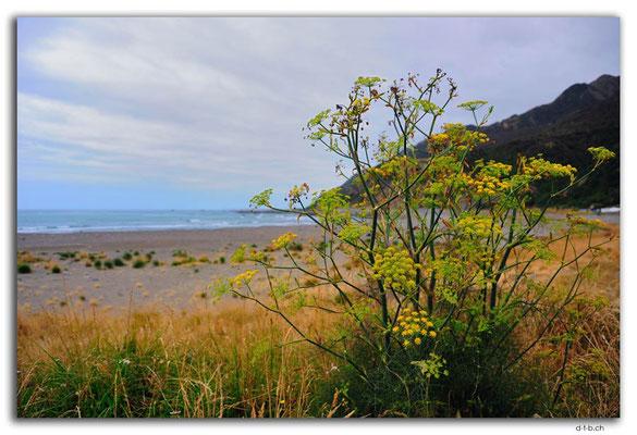 NZ0694.Okiwi Bay