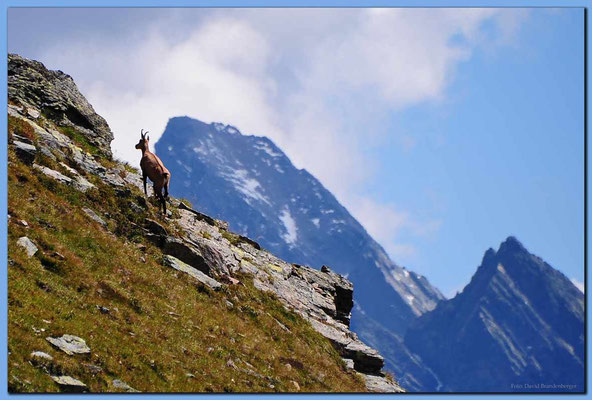 A0538.Gams vor Plattenhorn.Klosters.CH