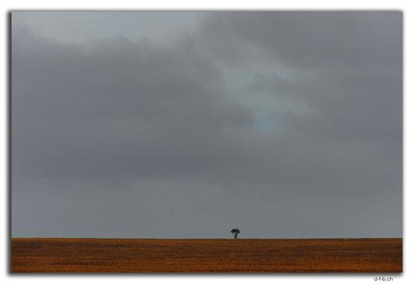AU0962.Eyre Highway.Einzelner Baum