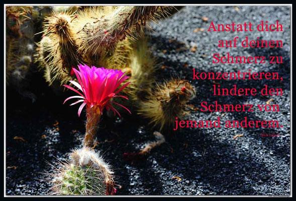 S0171.Jardin de Cactus.Lanzarote.ES.Text: Nick Vujicic