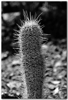 LAN102.Kaktus