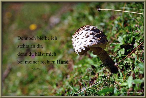 S0143.Pilz.Klosters.CHPsalm 73.23