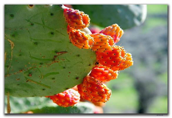 GR0506.Kaktusfrüchte