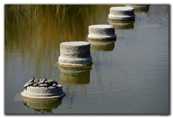 TR0229.Letoon.Tempel und Schildkröten