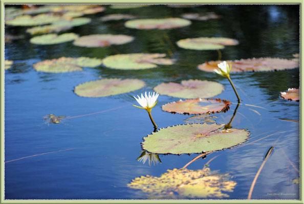 JM090.Seelilien Great Morass