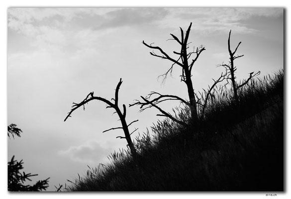 PL308.Leba.Wald