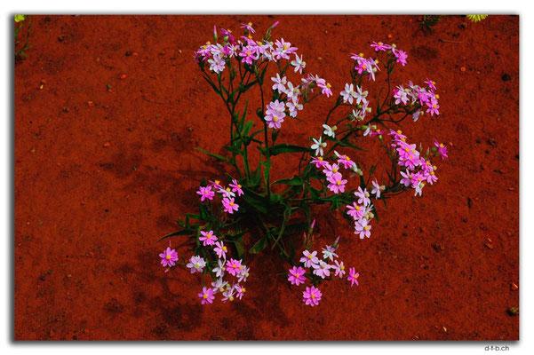 AU0414.Blume