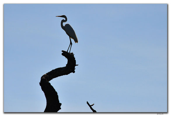 AU0017.Corroboree Billabong.Wading Heron