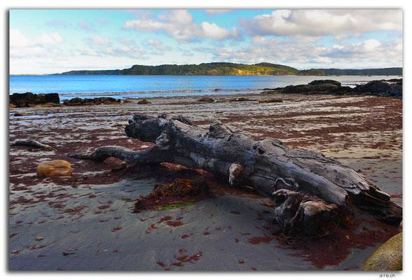 NZ0841.Stewart Island.Oban.Evening Cove