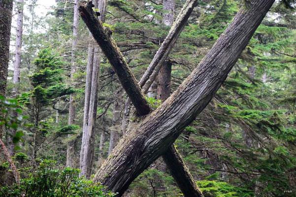 CA0119 WCT Baumkunst