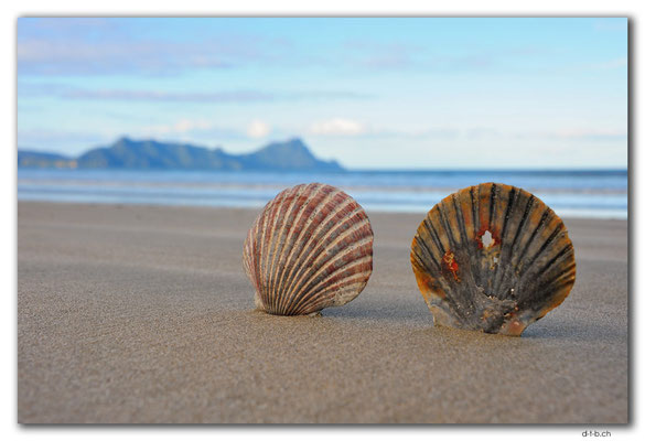 NZ0216.Uretiti Beach.Shells