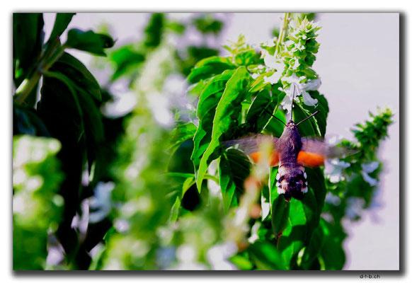 UZ0226.Tashkent.Insekt