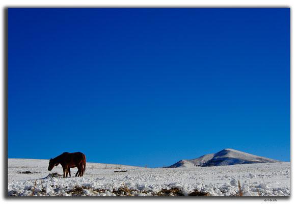 KG0035.Bishkek.Kyrgyz Ala Too und Pferde
