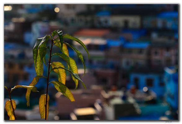 KR0311.Busan.Gamcheon Cultural Village