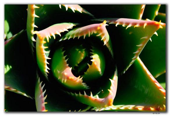 GR0597.Oia.Kaktus